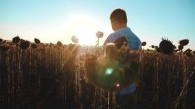 La forma de vida del granjero del hombre con la tableta en el campo de los trabajos del girasol va tierra de los paseos del suelo metrajes
