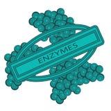 La forma delle cellule degli enzimi vector la vista del primo piano dell'illustrazione Biotecnologia digestiva royalty illustrazione gratis