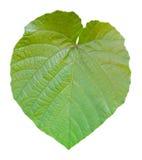 La forma di foglia gradice il cuore su fondo bianco Fotografie Stock Libere da Diritti
