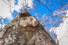 La formación de naturaleza en el bosque y el cielo Fotos de archivo