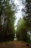 La formación del árbol que forma un vestíbulo fotografía de archivo
