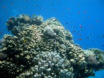 La formation de corail et les confettis aiment des poissons Photo libre de droits