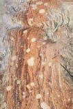 La formazione rocciosa australiana macchia il modello di punti Fotografie Stock