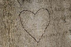 La forme de coeur a découpé dans l'arbre Photo libre de droits