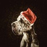 La forme de great dane de harlequin de Santa félicite le Joyeux Noël Images libres de droits