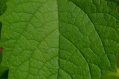 La forme et la texture des feuilles vertes tropicales images stock