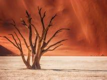 La forme gracieuse d'un squelette d'arbre dans Deadvlei, Namibie photo libre de droits