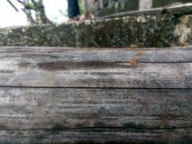 La formica Immagine Stock Libera da Diritti