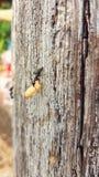La formica e l'uovo Immagine Stock Libera da Diritti