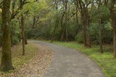 La fortaleza Rosecrans es cubierta por las ramas gruesas y las hojas verde oscuro foto de archivo