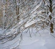 La forte nevicata ha piegato i rami degli alberi Fotografie Stock Libere da Diritti