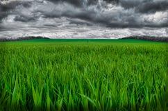 La forte pluie vient bientôt sur le champ vert photographie stock libre de droits