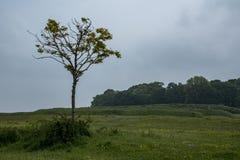La fortezza di età del ferro di Badbury suona in Dorset Fotografie Stock