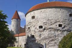 La fortificazione si eleva, margarita grassa nella priorità alta, Tallinn, Estonia della torre Fotografia Stock
