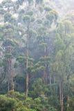 La foschia ha protetto la foresta Fotografie Stock