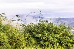 La foschia in montagna su Chiang Mai Fotografia Stock Libera da Diritti