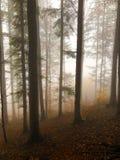La foschia nella foresta variopinta di autunno fotografia stock libera da diritti