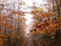 La foschia nella foresta variopinta di autunno fotografia stock