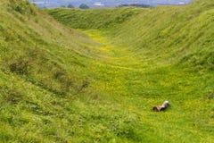 La fossa Badbury suona la fortificazione della collina di età del ferro Fotografia Stock Libera da Diritti