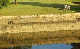 La fossa ed il prato della fortificazione del vellore con i cavalli Fotografia Stock