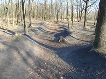 La fossa fra gli alberi con le foglie cadute nel parco di autunno Fotografie Stock