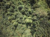 La foto aérea del abejón del bosque del campo, remata abajo de la visión en Sunny Summer Day - el material de base, apariencia vi fotografía de archivo libre de regalías