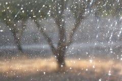 La foto abstracta borrosa de la explosión de la luz entre árboles y bokeh del brillo se enciende imagen filtrada y texturizado Imagenes de archivo