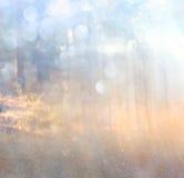 La foto abstracta de la explosión de la luz entre árboles y bokeh del brillo se enciende se empaña y se filtra la imagen Foto de archivo libre de regalías