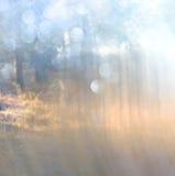 La foto abstracta de la explosión de la luz entre árboles y bokeh del brillo se enciende se empaña y se filtra la imagen Imágenes de archivo libres de regalías