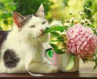 La foto alta vicina del gatto nella masticazione del giardino fiorisce Fotografia Stock