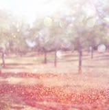 La foto astratta vaga dello scoppio della luce fra gli alberi e il bokeh di scintillio si accende Immagine filtrata Fotografia Stock