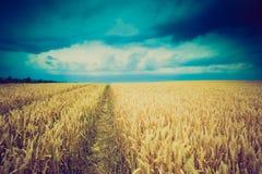 La foto d'annata della tempesta si rannuvola il giacimento di grano Immagini Stock Libere da Diritti