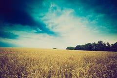 La foto d'annata della tempesta si rannuvola il giacimento di grano Fotografia Stock Libera da Diritti