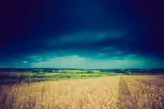 La foto d'annata della tempesta si rannuvola il giacimento di grano Immagini Stock