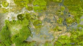 La foto de la esquina de la vista de pájaro o del top allí es toneladas de árboles verdes fotografía de archivo libre de regalías