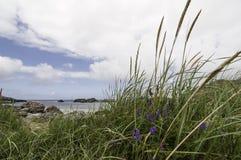 La foto de la línea de la playa noruega típica de la costa este Fotos de archivo