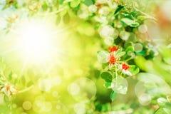Flores blancas y rojas de la primavera Imágenes de archivo libres de regalías