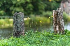 La foto de los troncos de árbol viejos tajó abajo en el campo en Sunny Summer Day con el espacio para el texto, el concepto de pa fotografía de archivo