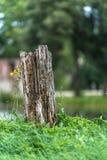 La foto de los troncos de árbol viejos tajó abajo en el campo en Sunny Summer Day con el espacio para el texto, el concepto de pa imagen de archivo