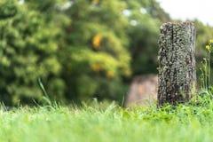 La foto de los troncos de árbol viejos tajó abajo en el campo en Sunny Summer Day con el espacio para el texto, el concepto de pa foto de archivo libre de regalías