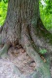 La foto de los troncos de árbol viejos tajó abajo en el campo en Sunny Summer Day con el espacio para el texto, el concepto de pa fotos de archivo