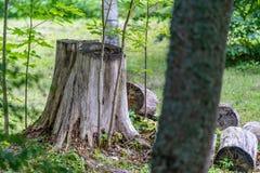 La foto de los troncos de árbol viejos tajó abajo en el campo en Sunny Summer Day con el espacio para el texto, el concepto de pa foto de archivo