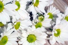 La foto del primo piano della molla bianca fiorisce sui precedenti di legno fotografia stock libera da diritti