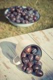 La foto del vintage, ciruelos se derrama fuera de la taza metálica en la tabla de madera en jardín el día soleado Fotos de archivo