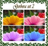 La foto della gerbera ha messo con le gocce di acqua, in 4 colori Immagini Stock Libere da Diritti