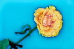 La foto di un bello è aumentato nello stile di una cartolina! immagini stock libere da diritti