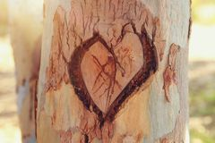 La foto di vecchio tronco di albero con cuore ha scolpito su  Valentine& x27; concetto di giorno di s fondo romantico Fotografia Stock Libera da Diritti