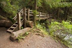 La foto grandangolare dell'estremità di legno del ponte della natura vicino a Marymere cade, parco nazionale olimpico Fotografia Stock