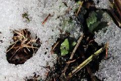 La foto macra de la nieve de fusión Fotos de archivo libres de regalías