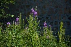 La foto per l'erba del collage fiorisce il fondo astratto immagine stock